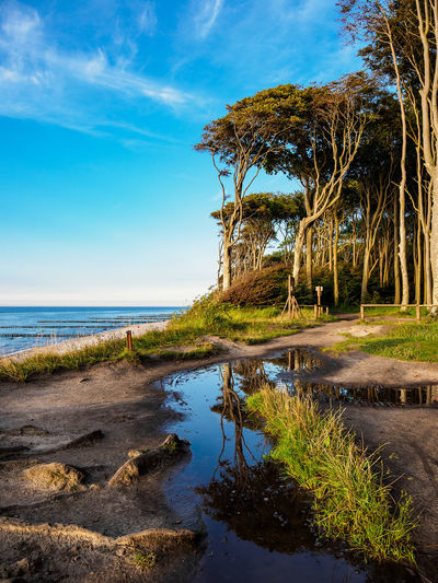 Coastal forest in Nienhagen, Germany. Baltic Sea Gespensterwald Nienhagen Germany Relaxing Sky And Clouds Beauty In Nature Cloud - Sky Coast Coastal Forest Day Forest Journey Landscape Nature No People Outdoors Shore Tourism Travel Destinations Tree Vacation Water
