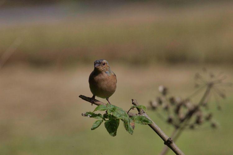 Bird Perching Living Organism Close-up Animal Themes