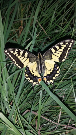 Beautiful and rare butterfly!!! Taking Photos Hello World