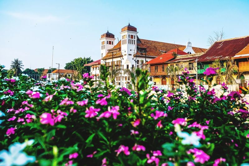 old city at jakarta Landmark Silence INDONESIA Old Buildings Jakarta Flowering Plant Flower Plant Architecture Growth Sky Building Exterior Built Structure Nature Fragility No People Beauty In Nature Building Day Clear Sky Multi Colored Low Angle View Outdoors Freshness Vulnerability