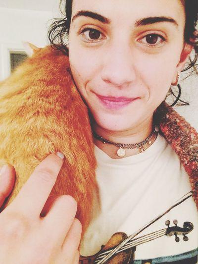 Fortheloveofcats Cat Catsagram