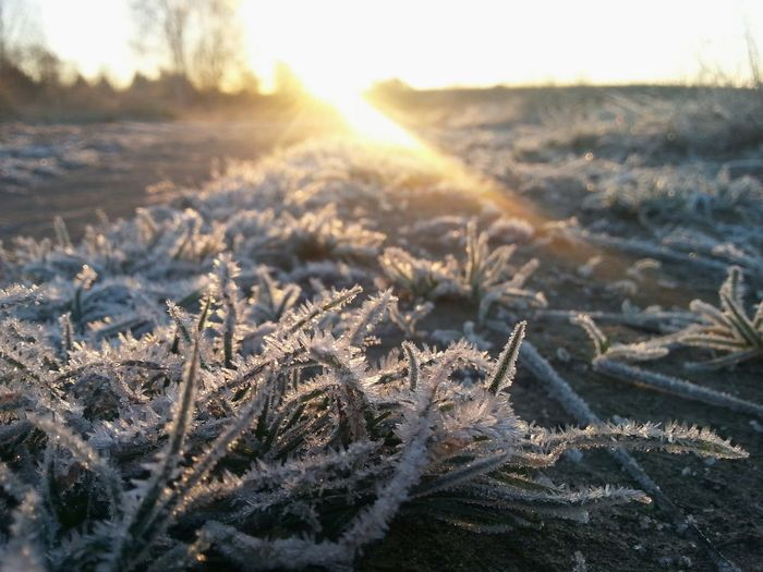 Nature Cold Temperature Beauty In Nature Frost Field Landscape Grass Outdoors No People Winter Sunrise Beauty Berlin 2016 Morning Sun Stadtnatur Beauty In Nature Nature Photography Wege Allein Unterwegs Spazieren
