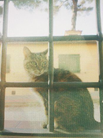 Cat Vscocam VSCO