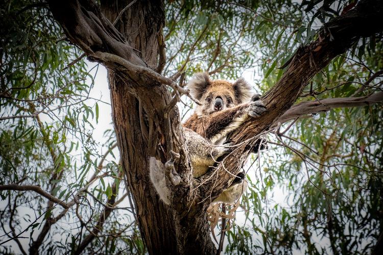 Squirrel sitting on tree trunk
