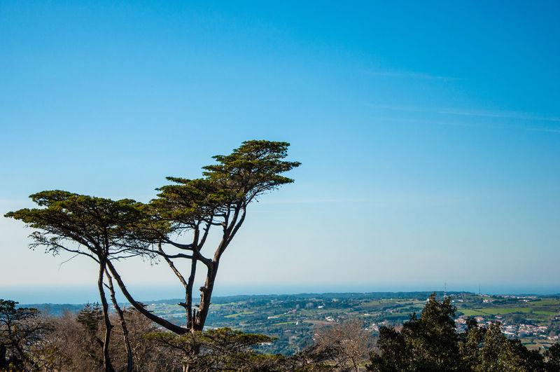 Bonsai tree on mountain against clear blue sky