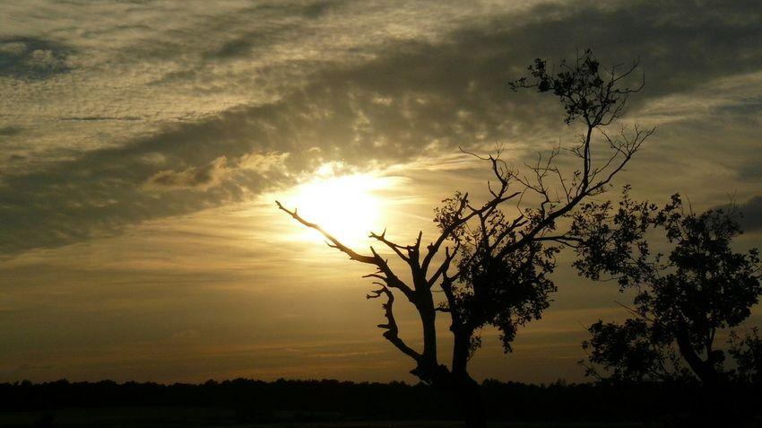 Tree Tree Area Sunset Dawn Rural Scene Forest Natural Parkland Multi Colored Silhouette Sunlight