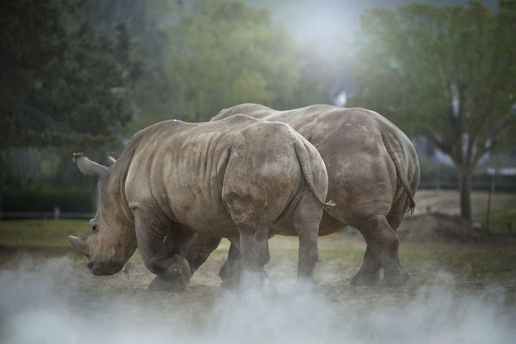 Rhino Elephant