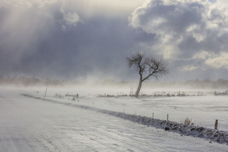Snowstorm on its way Winter Cold Temperature Snow Tree Environment Tranquil Scene Tranquility Beauty In Nature Plant Sky Scenics - Nature Landscape Land Fog Nature No People Cloud - Sky Covering Non-urban Scene Outdoors Cold Hazy  Sweden Öland Road