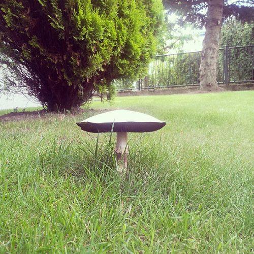 Mushroom Garden Anklam