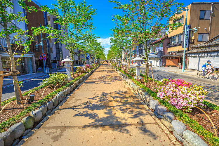 After Torii gate begins the Dankazura, a pathway flanked by cherry trees leading to Tsurugaoka Hachiman shinto sanctuary in Kamakura, Japan. Wakamiya-oji street offers spectacular landscapes in spring Kamakura, Japan - April 23, 2017: Komachi-dori Street, the shopping street outside Kamakura station. The popular touristic street is in ancient city of Kamakura with historic restaurants and stores. Dankazura Japan Japan Photography Japanese  Japanese Culture Japanese Temple Kamakura Kamakura Daibutsu Kamakura Japan Kamakura Station Path Road Shrine Shrine Of Japan Shrines & Temples Shrines And Temples Statue Wakamiya-Oji WakamiyaOji Architecture Building Exterior Built Structure City Day Diminishing Perspective Direction Flower Flowering Plant Footpath Incidental People Kamakura Sea Nature Outdoors Pathway Plant Shadow Sky Street Sunlight Temple The Way Forward Transportation Tree Wakamiya