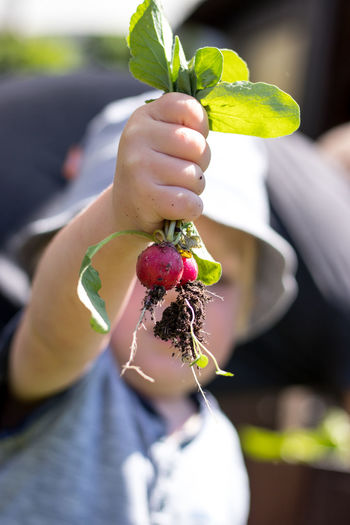 Close-up of boy holding fruit at farm