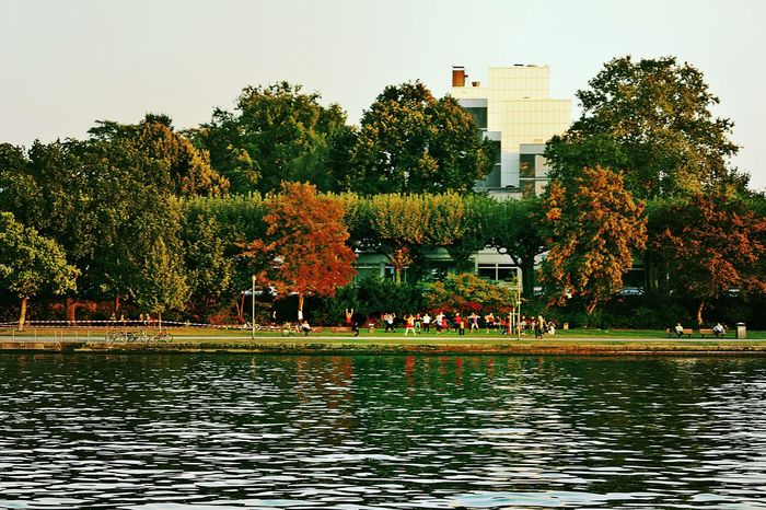 Zumba Fitness In The Evening Sun On The River Bank  Main River Group Of People City Life Lifestyle Cityscapes Nature Water Waterfront Built Structure Growth Building Exterior Green Color Park - Man Made Space Park Beauty In Nature Travel Destinations Day Frankfurt Am Main Germany🇩🇪 Fall 2016 Enjoy The New Normal