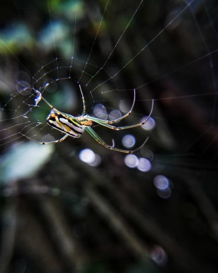 Spider! Spider One Animal Focus On Foreground Animal Wildlife Insect Fragility Animal Leg Complexity Animal Themes Spider Web Nature Animals In The Wild