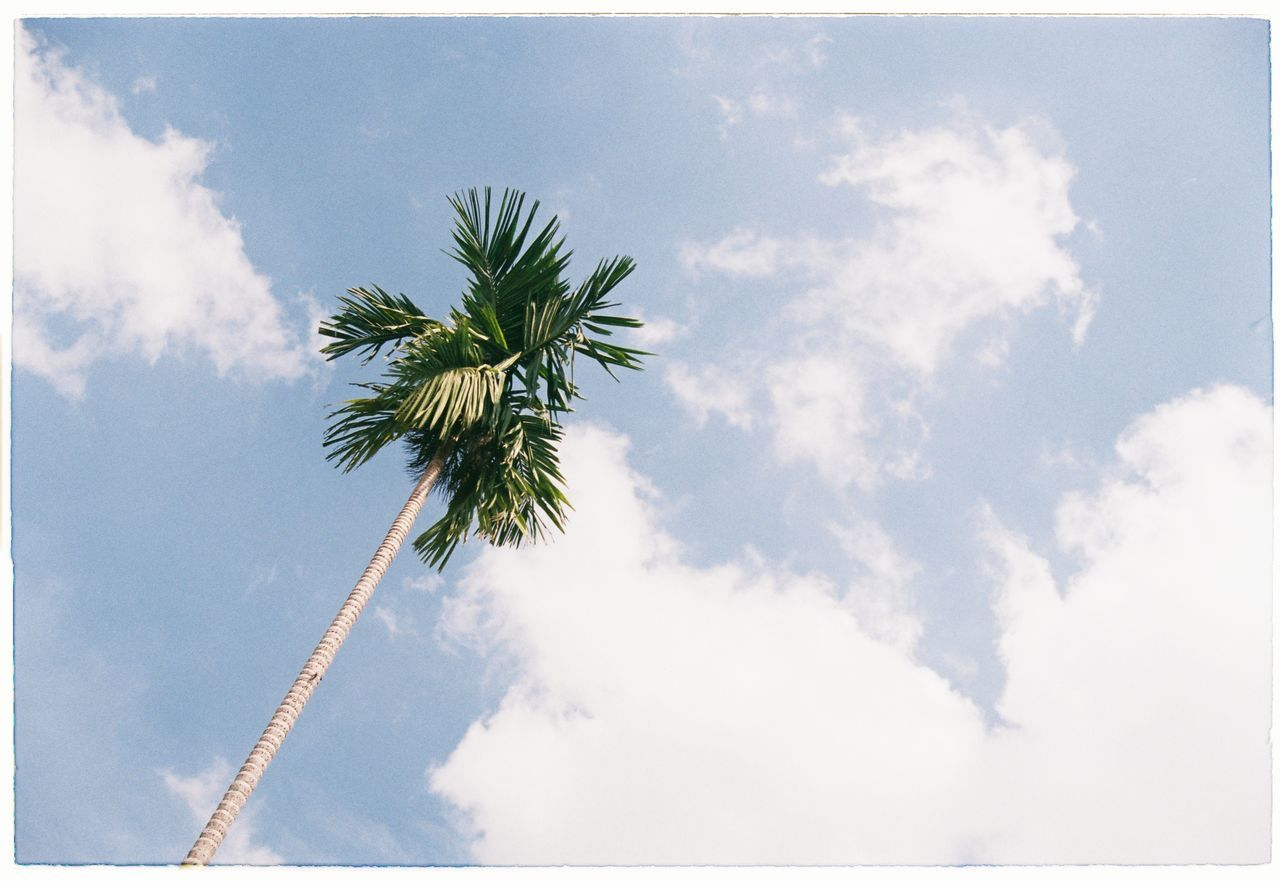 sky, low angle view, cloud - sky, nature, beauty in nature, day, palm tree, no people, outdoors, scenics, tree