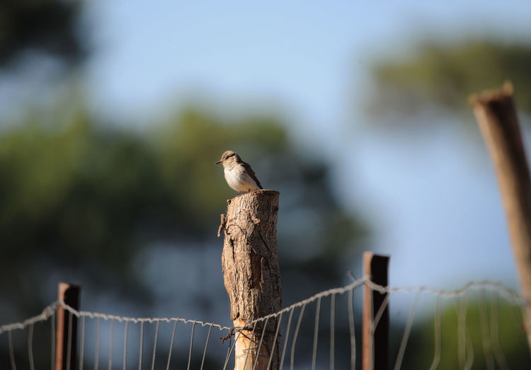Bird perching on a fence