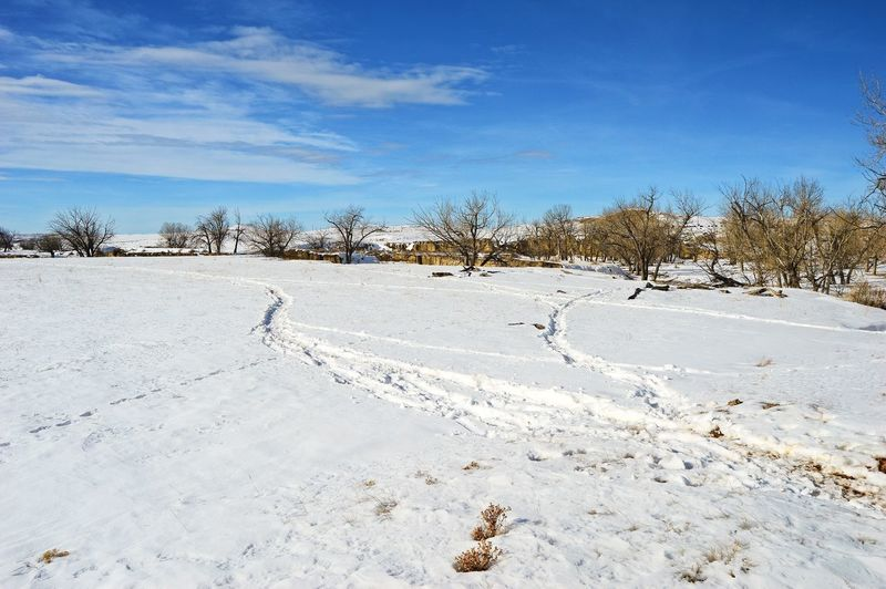 Snow trails to creek Pasture Branch Tree Snow Outdoors Winter Cold Temperature Day Nature Sky Landscape One Person