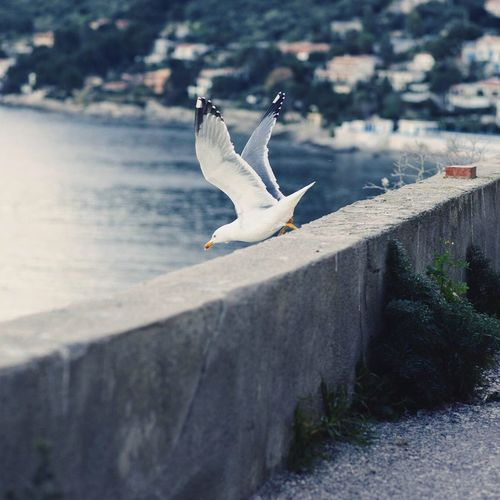 Seagull By Retaining Wall