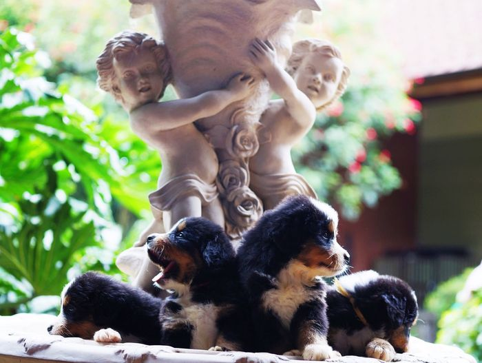 Puppies Sitting By Statue