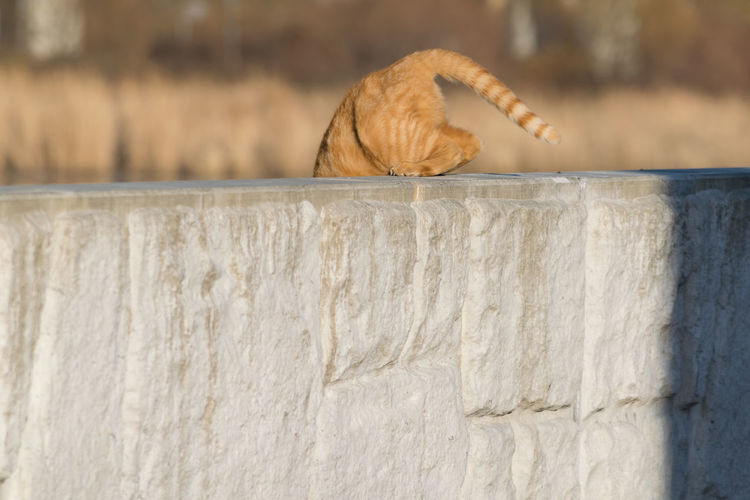 cat tail Animal Themes Cat Cat Tail Close-up Day Mammal Nature No People One Animal Outdoors