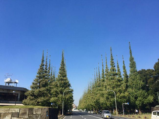 並木道 Tree Line Tree Lined Street Streetphotography TOWNSCAPE Sky Blue Sky IPhoneography