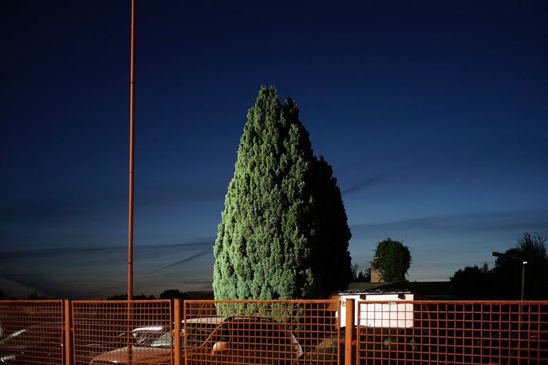 Plants growing by railing against sky at night