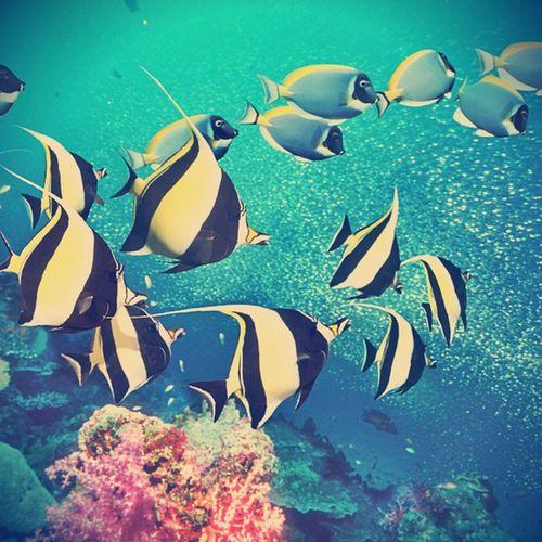saltwater fish at Pangkor island.