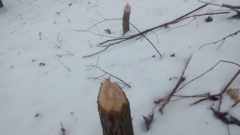 Clearing some of the trees DamnItsCold ABeautifulMorning FreezingMyAssOff