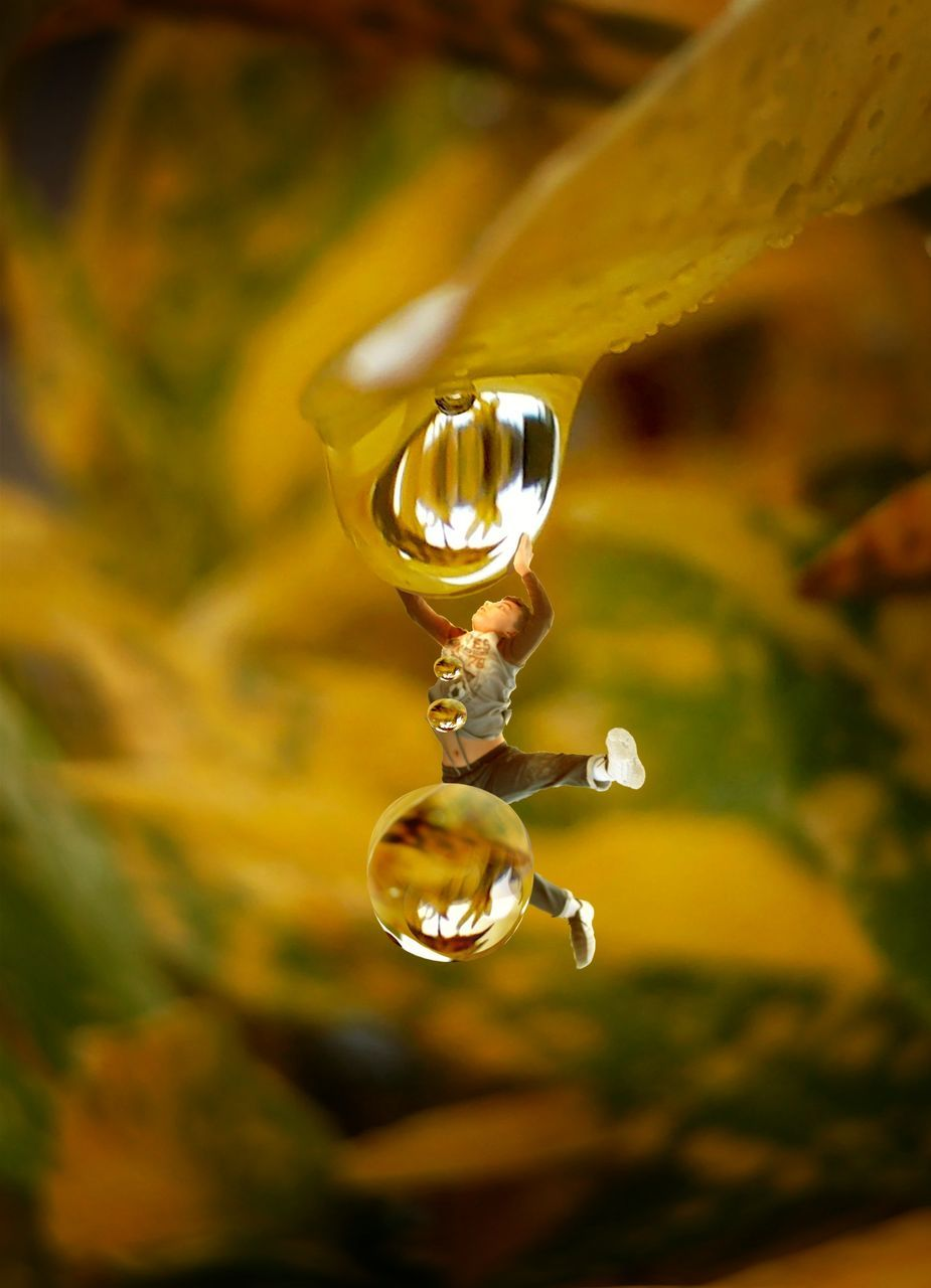 drop, flower, jewelry, close-up, no people, focus on foreground, water, nature, plant, fragility, beauty in nature, luxury, indoors, day