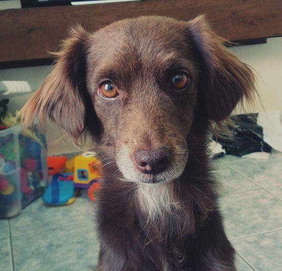 🐶❤ #doglover First Eyeem Photo