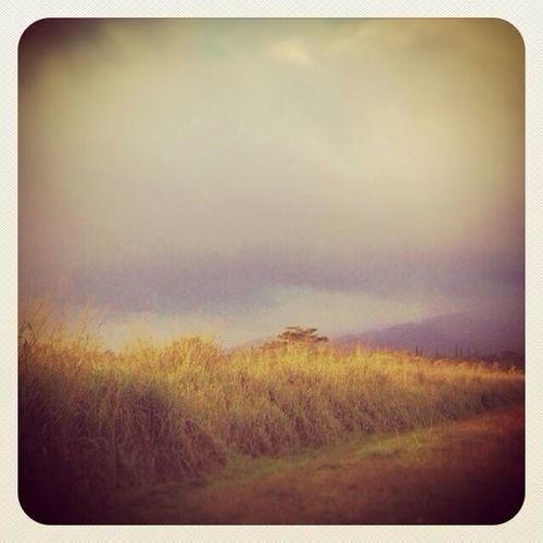 #clouds NEM Clouds NEM Landscapes pastel