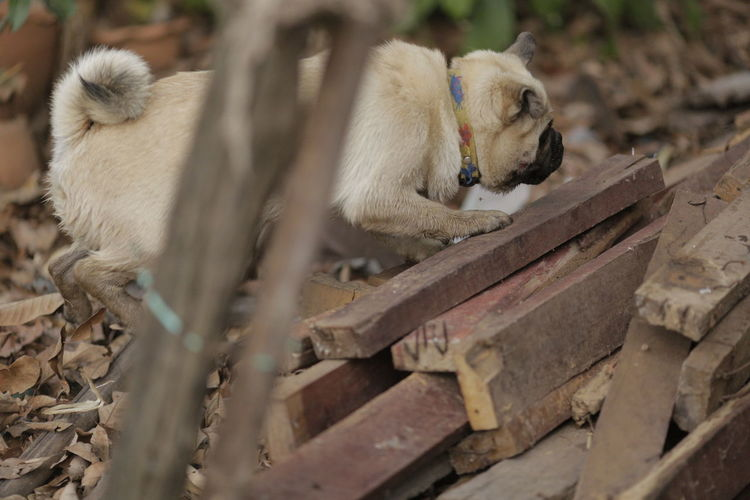 Dog relaxing on wood