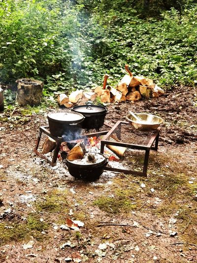 Nature No People High Angle View Outdoors Day Grass Cooking On Open Fire Living With Nature Woodland Camp Back To Nature WoodLand Field Back To Basic Old-fashioned Beauty In Nature Logs Log Fire Log Pile Camping Wood Burning Stove Burning Firewood Fire Lit Heat Woodpile