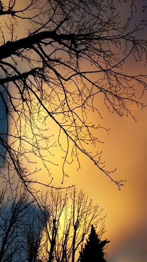 Tree Silhouette Hugging A Tree Autumn Colors Colorsky Sunset #sun #clouds #skylovers #sky #nature #beautifulinnature #naturalbeauty #photography #landscape Quiet Moments Around Me Walking Around Tree Branches Tree Branch