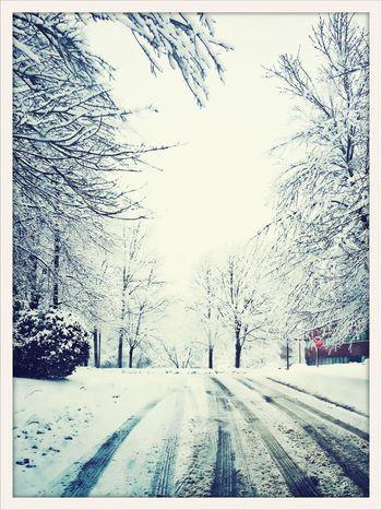 After the snowfall Street Photography Winter Snow NEMstreet AMPt_community Massachusetts NEM Mood