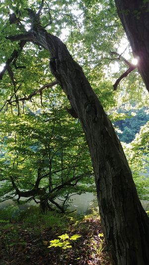 Tree Day Tree Trunk Growth Outdoors Sunlight No People Shadow Nature Low Angle View Branch Sky Water