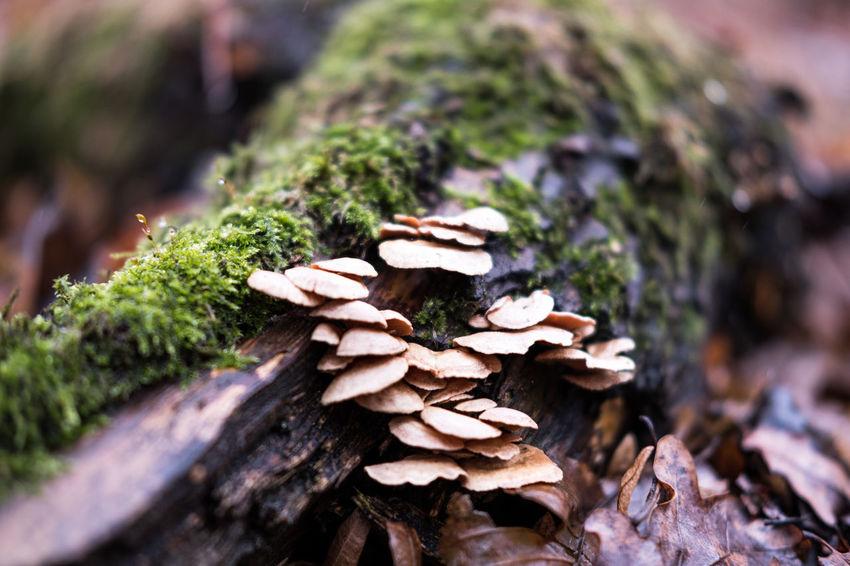 Outdoors Nature Moos Mushroom Mushrooms Mushrooms 🍄🍄 Bokeh Bokeh Photography FUJIFILM X-T2 Swirly Bokeh Swirl Bokeh Magic Mushrooms 😜 The Secret Spaces EyeEm Selects