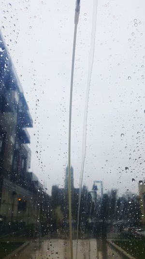Rain Rainy Days Raindrops Raining Day Rainy Days☔ Weather Weather Photography Umbrella Umbrella☂☂ Rainy Day Rain ♥ Outdoors Outdoor