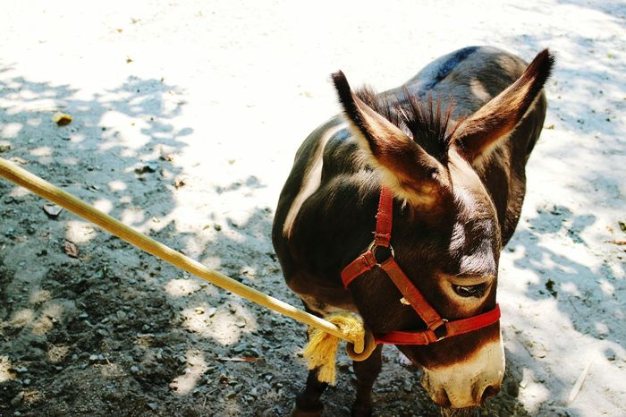 Another photo of the donkey. Nature Photography Explore Travel Animal Love Donkey Afternoon Walk Thingsilove Up Close Street Photography Streetphotography Chillafternoon Captured Capturetoday Summer Zoo Wildlife Natures Diversities