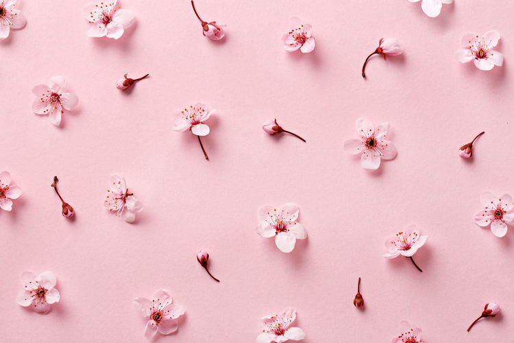 Flower blossom pattern on pink background. Top view Beauty In Nature Blossom Flower Flower Head Fragility Freshness Indoors  Nature No People Pattern Petal Pink Color Repetition Season  Spring