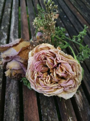 Romantisk Blomster Flower Photography Roses Nature Summer Flowers Sommer Romantic Flowerporn Dansk Natur Decay Decaying