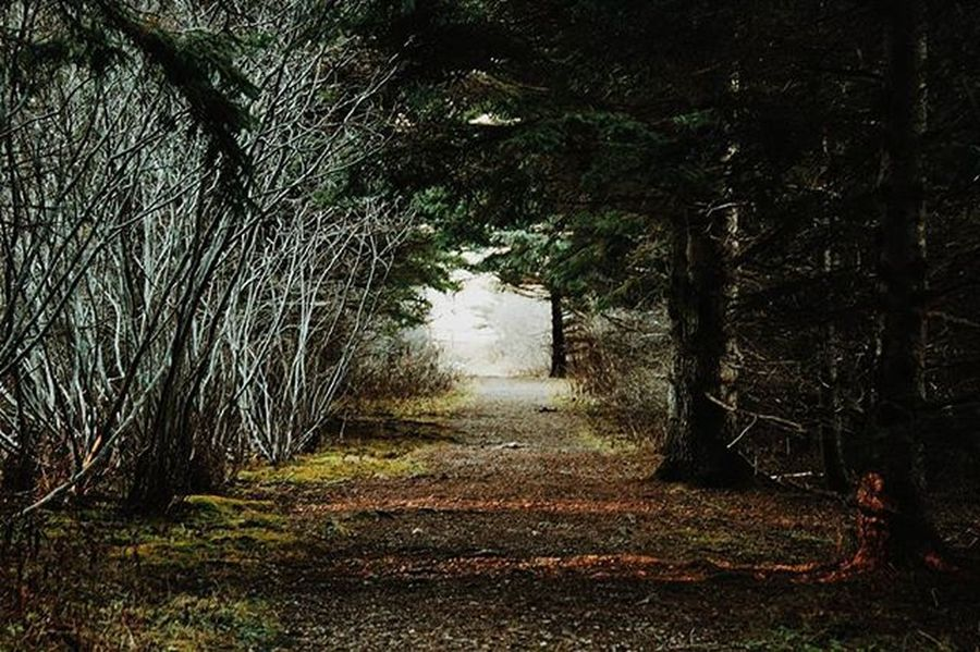 Late post but I was bored 💁 Photographer Photography Woods Walk Trees Park Forest Landscape Myphoto L4l Instagood VisitNovaScotia Novascotia Thankyoucanada Tree Trail Canon CanonT5 Fall Autumn Winter
