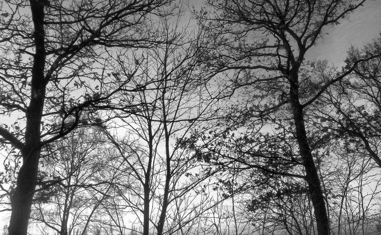 Blackandwhite Tree_collection