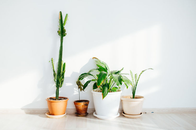 Green houseplants in front of a white wall
