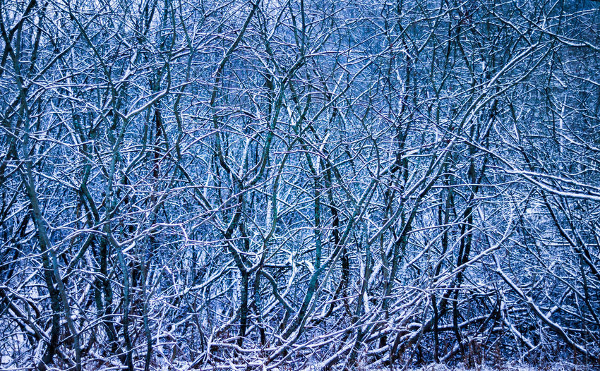 Light new snow. Cold Temperature Snow Winter Frozen Beauty In Nature No People Tranquility Nature Backgrounds WoodLand Tranquil Scene Winter Wintertime Winter Trees Natural
