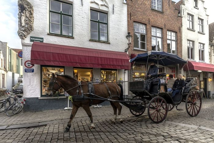 Walking Streetphotography Street Street Photography Travel Travel Photography Travel Destinations Travel Life Brugge Brugge, Belgium Building Exterior Outdoors Day Domestic Animals