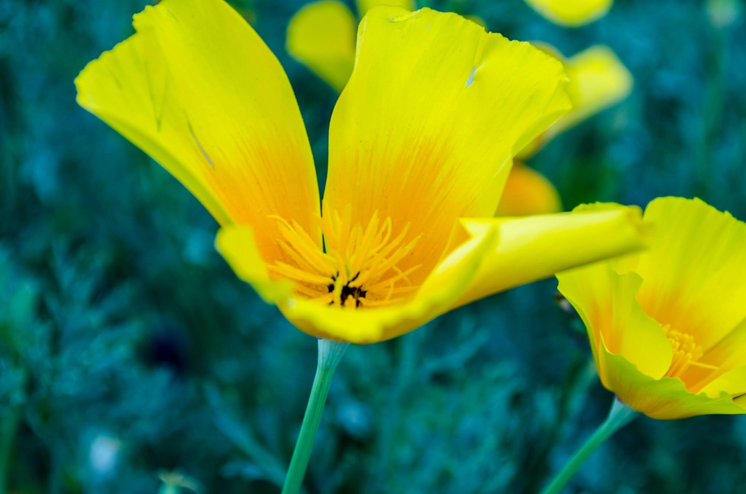 flower, yellow, petal, fragility, flower head, freshness, growth, close-up, focus on foreground, beauty in nature, nature, blooming, plant, pollen, single flower, in bloom, stamen, day, selective focus, stem