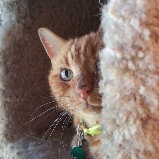 Curiousity Curious Cat