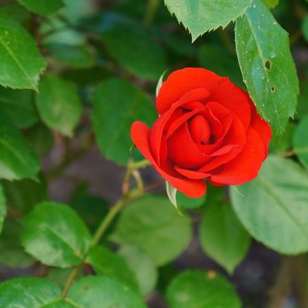 Feel The Journey Check This Out The Rose Flower