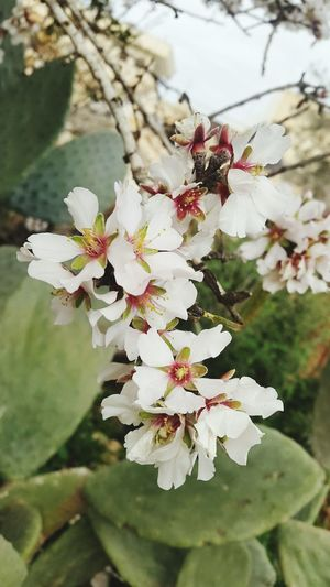Fllowers Fllower Green Color White Color Photography Photo 💚♡❤ 🌼flowers🌼 🌼🌼 Flower Fllowers Lovers Flower Springtime Blossom Cherry Blossom Tree Nature Beauty In Nature