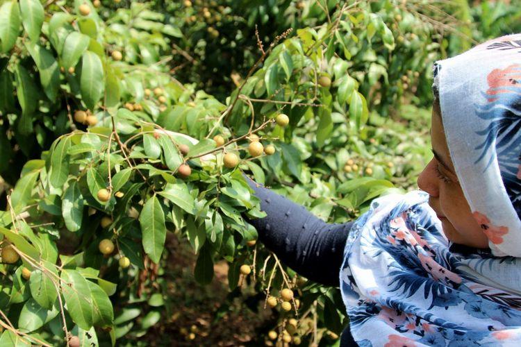 Woman wearing hijab picking fruits in farm